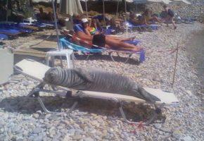 Αυτή είναι η Αργυρώ: Mια SWAG Φώκια που της αρέσει να τσιλάρει σε ξαπλώστρα στην Σάμο